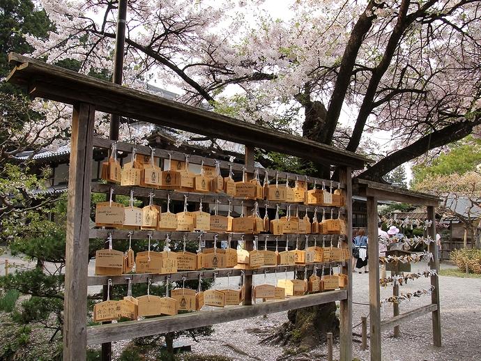 中尊寺本堂の絵馬かけ 桜の木の下で