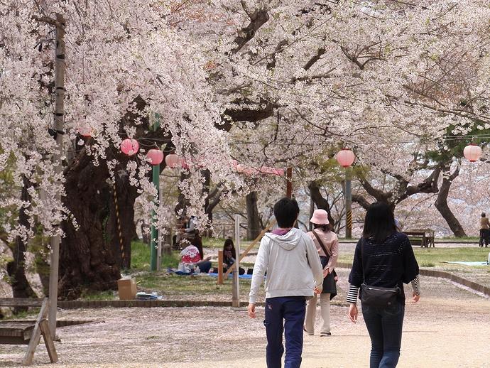 烏帽子山公園でお花見を楽しむ
