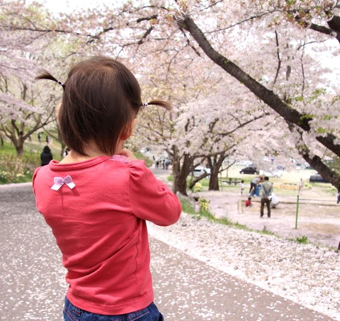 散り行く桜を眺めて(置賜さくら回廊烏帽子山公園にて)