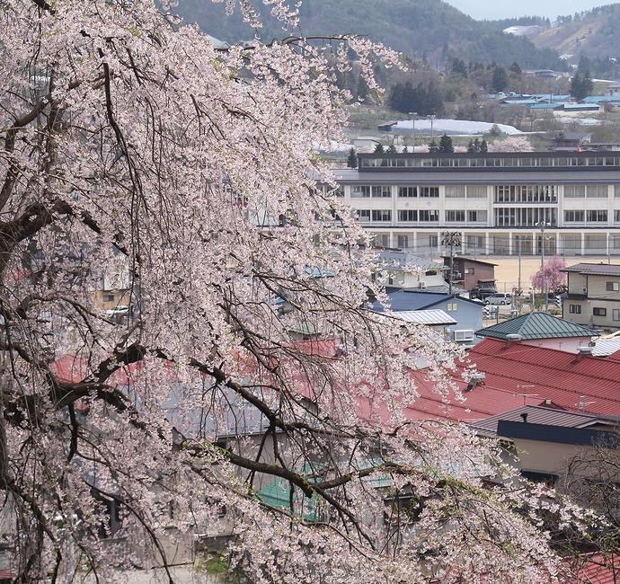 双松公園慶海桜と南陽市の町並み