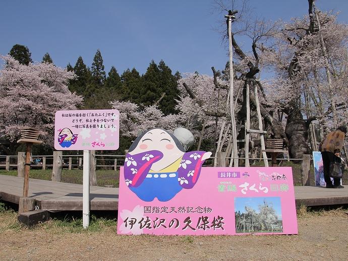 伊佐沢の久保桜 シャッタースポットにて