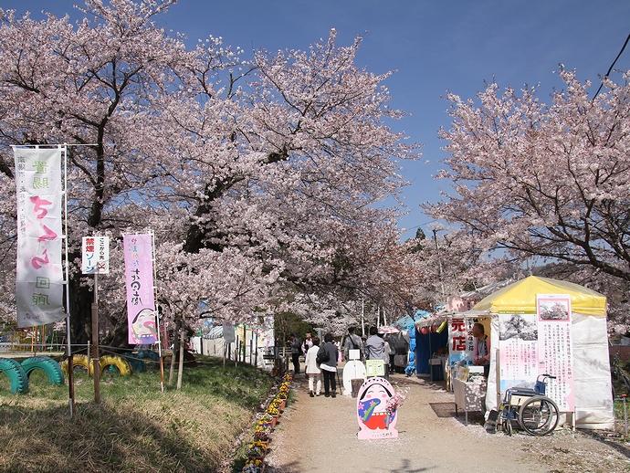 伊佐沢の久保桜周辺の様子