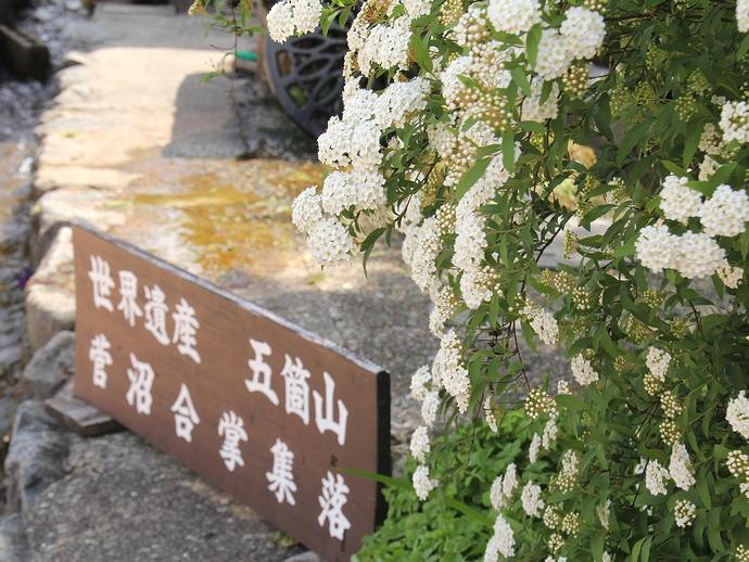 合掌集落に初夏の花が咲く