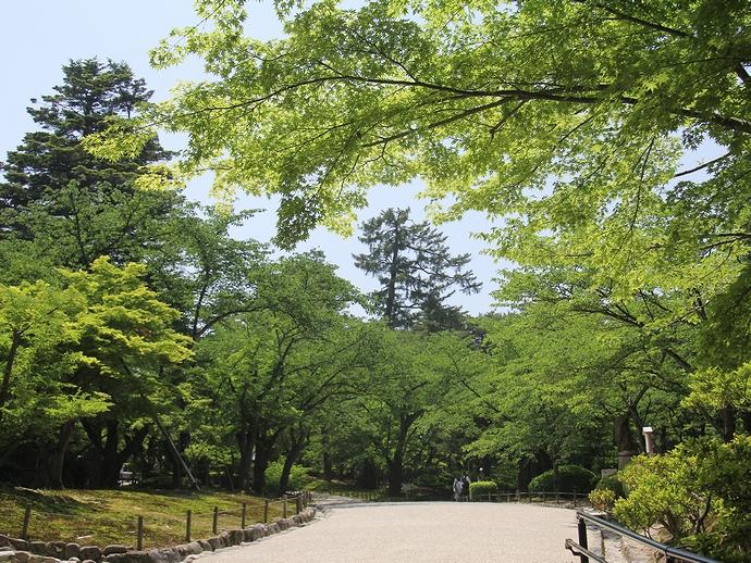 兼六園 そろそろ深緑の季節