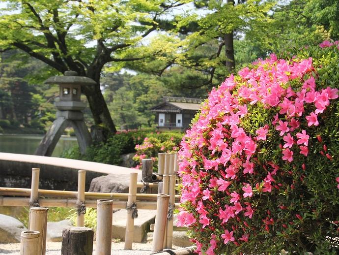 兼六園 サツキの花とことじ灯籠