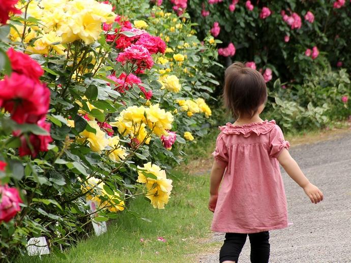カラフルなローズ園を散策!
