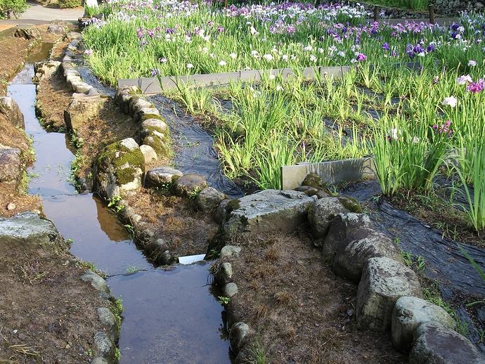 花菖蒲園を潤す湧き水の流路(卯辰山公園にて)