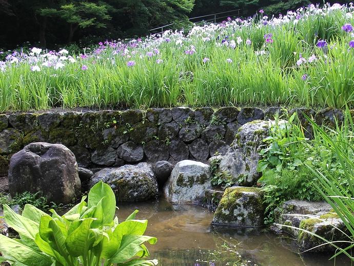 卯辰山花菖蒲園にある自然の湧き水
