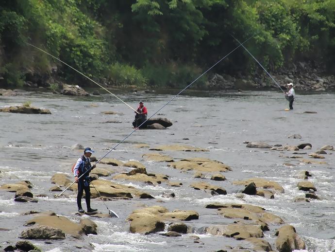 アユ釣りを楽しむ太公望たち(金沢市犀川中流にて)