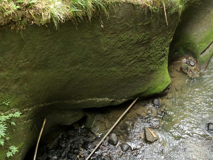 国指定天然記念物山科の大桑層の貝化石層