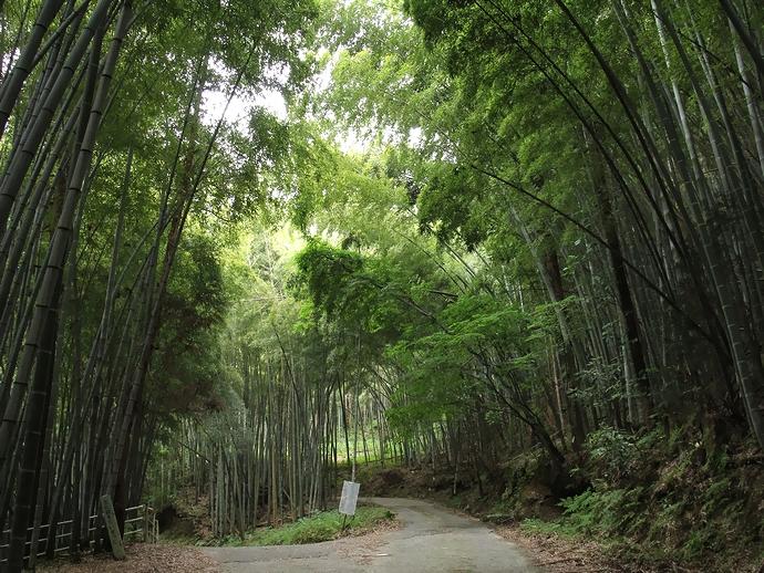 「山科の大桑層化石産地と甌穴」付近の竹藪