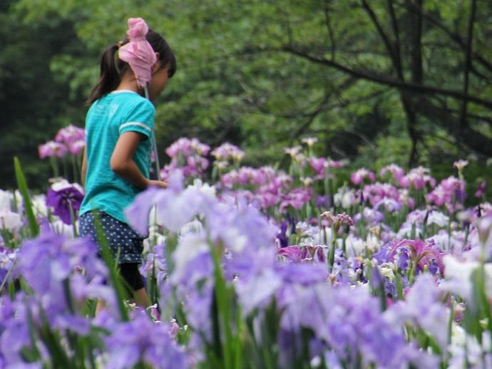 花しょうぶ祭りのワンシーン(砺波市頼成の森)