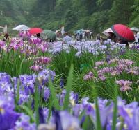 富山・頼成の森花しょうぶ祭り