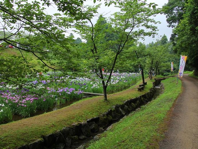頼成の森の緑と菖蒲田(富山県砺波市)