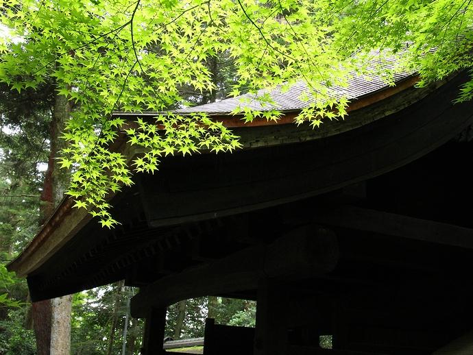 大乗寺総門とモミジの青葉