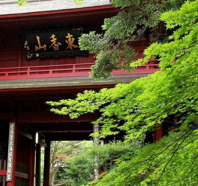 金沢市大乗寺の山門(赤門) 青葉とともに
