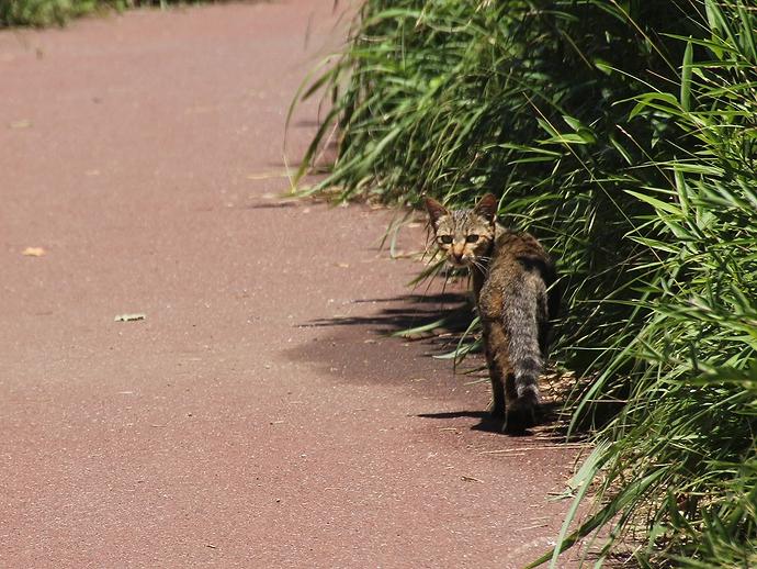 城ヶ島のネコ 目が合う