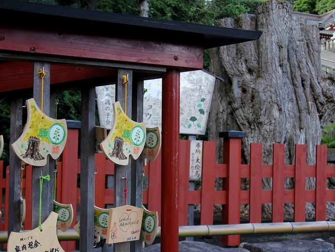 大銀杏の株と絵馬(鎌倉・鶴岡八幡宮)