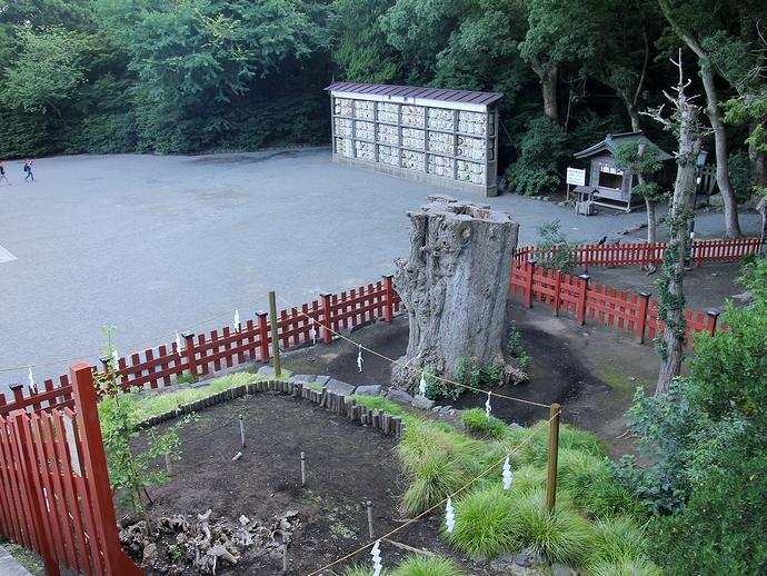 鎌倉・鶴岡八幡宮の大銀杏