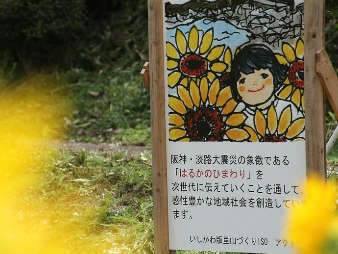 はるかのひまわり(金沢市平栗)