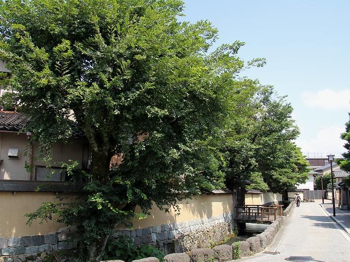 長町武家屋敷 今に残る土塀の町並み