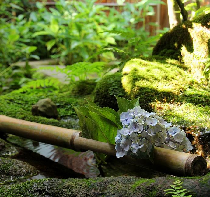 武家屋敷の小さな庭(金沢市長町)