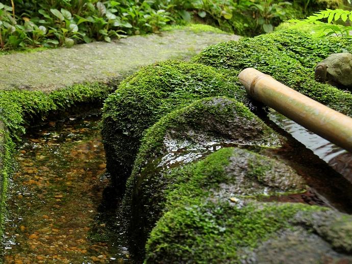 庭園の苔(野村家)