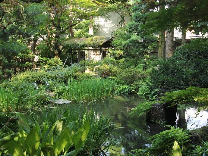 金沢玉泉園 水芭蕉の群生地(夏の様子)