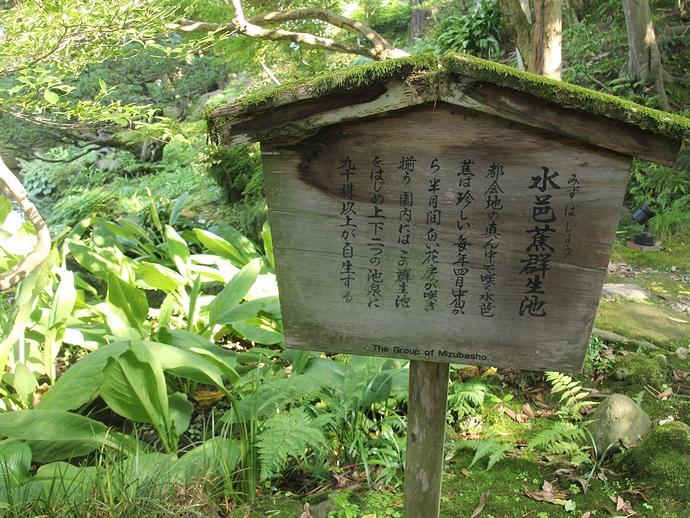 水芭蕉の群生地を知らせる看板(金沢市玉泉園にて)