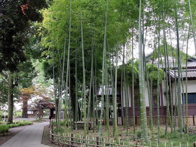 足利学校の小さな竹林
