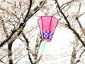 蒲郡市中央公園の桜14
