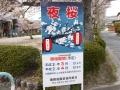 蒲郡市中央公園の桜15