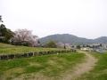 蒲郡市中央公園の桜7