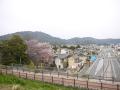 蒲郡市中央公園の桜9
