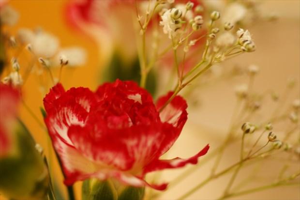 お部屋に花を飾って~