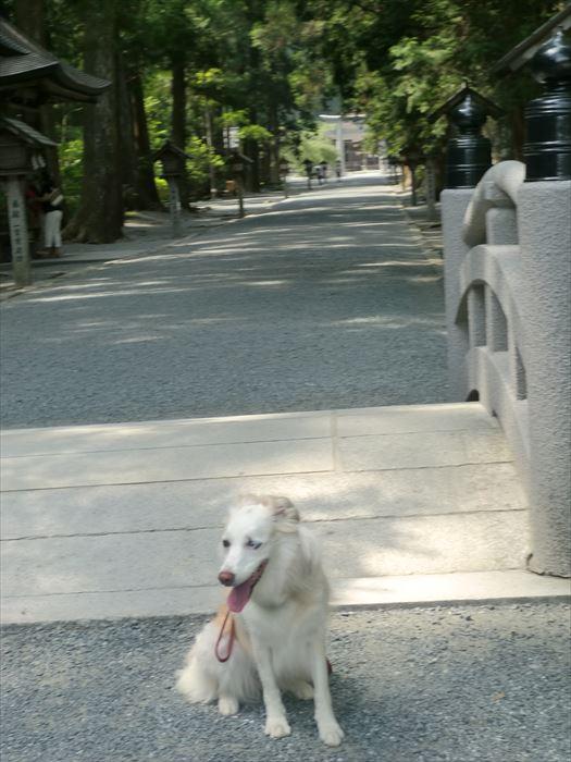 CIMG4646_R.jpg