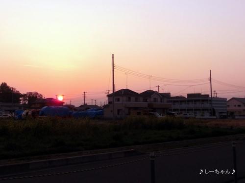 藤の花2014_01