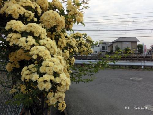 新島整形外科・2014_04