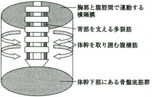 機能解剖 × トレーニング Functi...