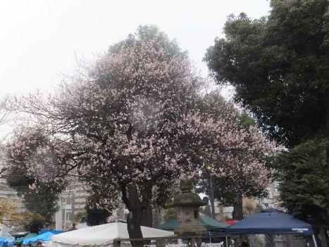 町田天満宮1