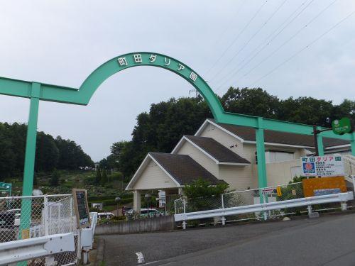 町田ダリア園1