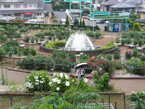町田ダリア園8