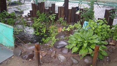 ★梅雨 池