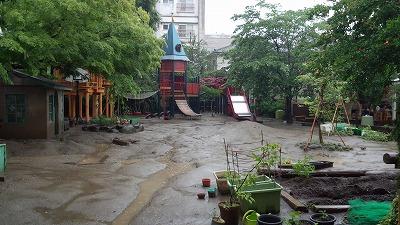 ★梅雨 園庭