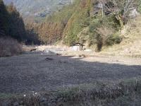 2009.1takkyubinhatake susuki 036