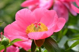 images 初夏の花④