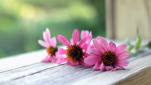 Pink-flowers-macro-wood-board_1600x900 (1)