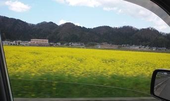 菜の花畑kai