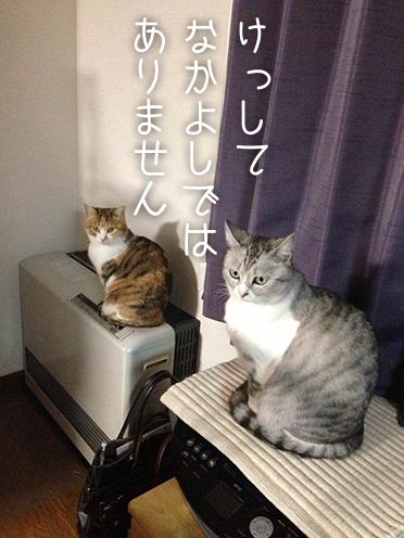 mikan_cha_ron.jpg