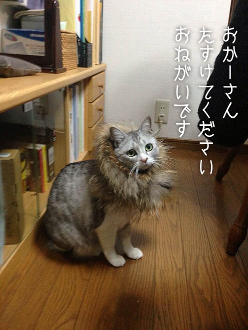 mikan_ron_02.jpg